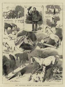 The Broncho Horses at the Royal Aquarium by Charles Burton Barber