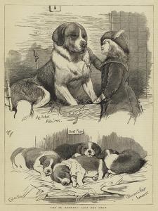The St Bernard Club Dog Show by Charles Burton Barber