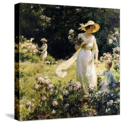 Among the Laurel Blossoms, 1914