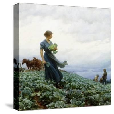 The Cabbage Field. 1914