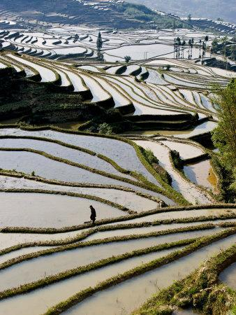 Flooded Bada Rice Terraces, Yuanyang County, Yunnan Province, China