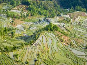 Flooded Laohu Zui Rice Terraces, Mengpin Village, Yuanyang County, Yunnan, China by Charles Crust