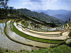 Flooded Rice Terraces, Panzhihua Village, Yuanyang County, Yunnan Province, China by Charles Crust