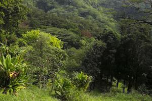 USA, Hawaii, Oahu, Honolulu. Lyon Arboretum Landscape across Manoa Valley by Charles Crust