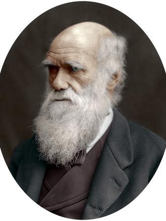 https://imgc.artprintimages.com/img/print/charles-darwin-british-naturalist-1878_u-l-q10lq9t0.jpg?p=0