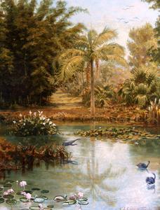 Black Swans by Charles E Gordon Frazer