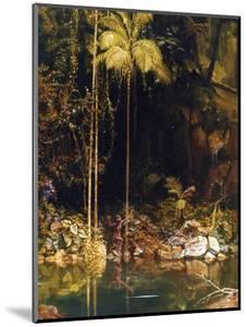 Forest Mirror, Queensland by Charles E Gordon Frazer