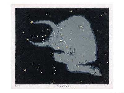 The Constellation of Taurus the Head Neck Shoulders and Forelegs of a Horned Bull