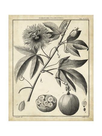 Passiflora I