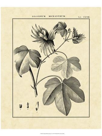 Vintage Botanical Study IV