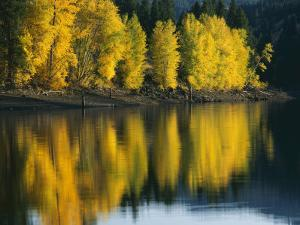 Aspen trees, Patterson Lake, Methow Valley, Washington, USA by Charles Gurche
