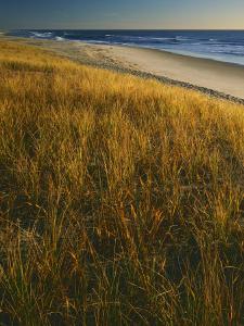 Assateague Island National Seashore, Virginia, USA by Charles Gurche