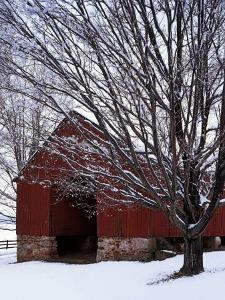 Barn and maple after snowfall, Fairfax County, Virginia, USA by Charles Gurche