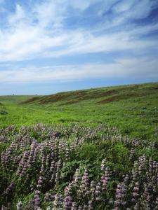 Big Basin Prairie Preserve, Kansas, USA by Charles Gurche