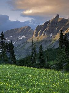Hanging Gardens, Logan Pass, Glacier National Park, Montana, USA by Charles Gurche