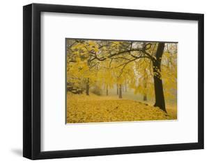 Horse Chestnut Trees in Fall, Manito Park, Spokane, Washington, USA by Charles Gurche