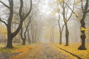 Manito Boulevard in October, Spokane, Washington, USA by Charles Gurche