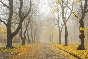 Manito Boulevard in October, Spokane, Washington, USA by Charles Gurche