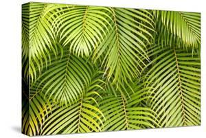 Palm Leaves, Maui, Hawaii, USA by Charles Gurche