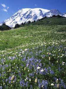 Paradise Meadows, Mt. Rainier National Park, Washington, USA by Charles Gurche