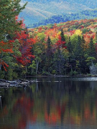 Shoreline of Heart Lake, Adirondack Park and Preserve, New York, USA