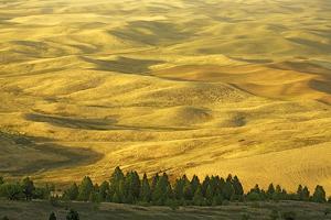 Wheat Fields, Palouse, Whitman County, Washington, USA by Charles Gurche