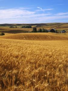 Wheat fields, Whitman County, Washington, USA by Charles Gurche