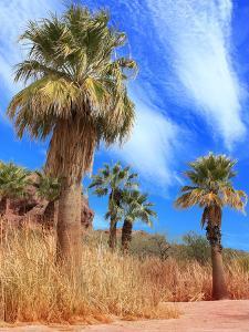 Desert Palm Oasis Phoenix Arizona by Charles Harker