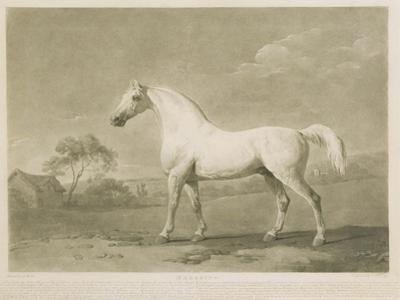 Mambrino, after George Stubbs, 1788 by Charles Howard Hodges