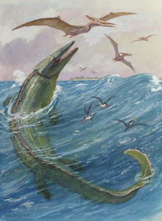 Mosasaurus Species Lived in Kansas, United States