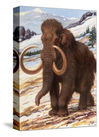 Woolly Mammoth Is a Close Relative to the Modern Elephant