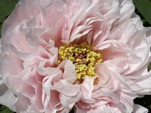 Close Up of a Pink Flower by Charles Kogod