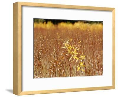 Native Grasses Display Autumn Colors