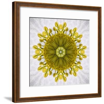 Kaleidoscope of Clematis flower
