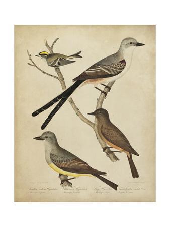 Bonapart Birds II