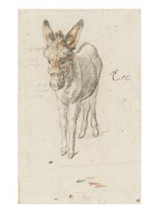 Âne by Charles Le Brun
