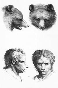 Similarities Between the Head of a Bear and a Man by Charles Le Brun