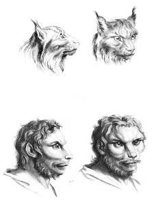 Similarities Between the Heads of a Lynx and a Man by Charles Le Brun