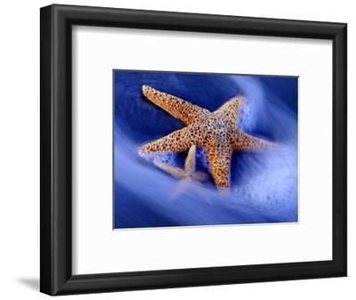 Two Starfish on Beach, Hilton Head Island, South Carolina, USA