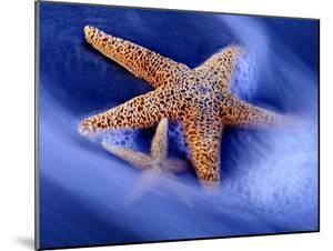 Two Starfish on Beach, Hilton Head Island, South Carolina, USA by Charles R. Needle