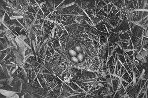 'Nest of Skylark', c1882, (1912) by Charles Reid