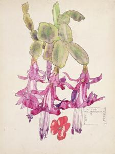 Cactus Flower by Charles Rennie Mackintosh