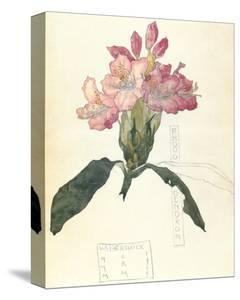 Rhodendron by Charles Rennie Mackintosh