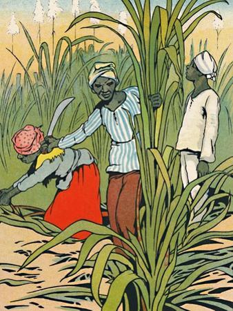 'At Work Among The Sugar-Canes', 1912 by Charles Robinson