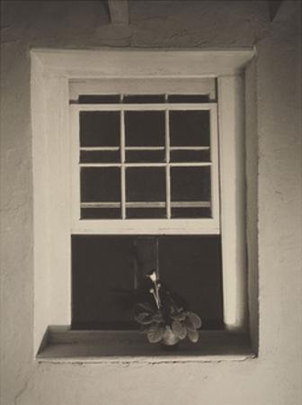 Doylestown House, Open Window, Negative about 1917