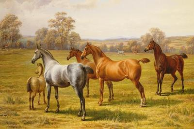 Horses and Foal in a Field