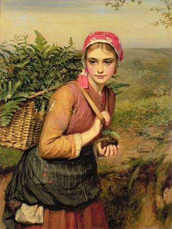 The Fern Gatherer