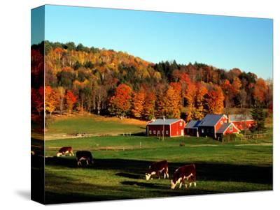 Autumn Colors and Farm Cows, Vermont, USA