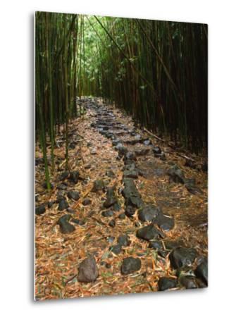 Bamboo Forest on the Waimoku Falls Trail, South of Hana, Maui, Hawaii, USA