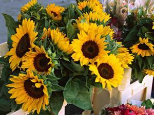 Market Sunflowers, Nice, France by Charles Sleicher